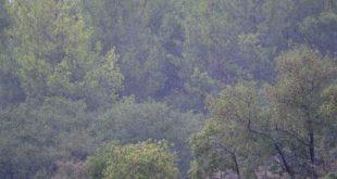 Ενέργειες για την αντιμετώπιση των προκληθεισών καταστροφών από τις σφοδρές βροχοπτώσεις στη Σαμοθράκη