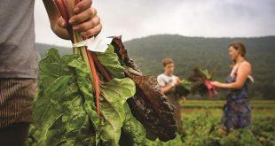 Εγκρίθηκε ο νέος κανονισμός για τα βιολογικά- Οι μικρότεροι αγρότες μπορούν να πιστοποιούνται ομαδικά